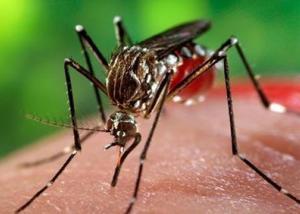 زيادة عدد حالات الإصابة بفيروس زيكا إلى المثلين في فيتنام